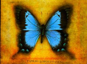 Blue_butterfly
