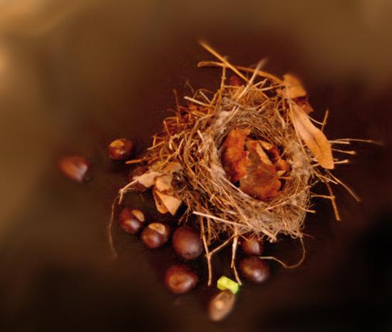 Nest_amazing_1