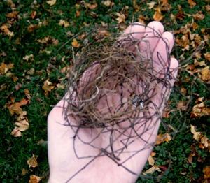 Nest_in_hand_1_4
