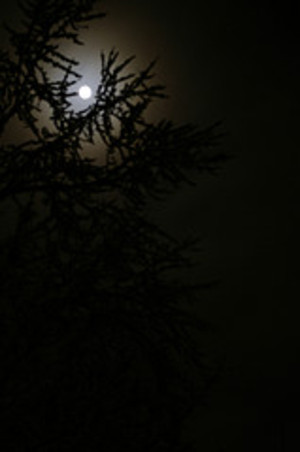 Winter_solstice_moon_1